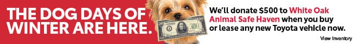 Animal Donation Dog