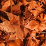 Fall Leaves on The Ground Car Care Tips