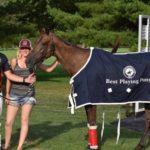 Horses to Horsepower