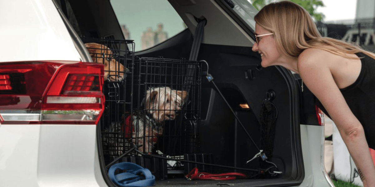 VW models for a Colorado road trip with your pet