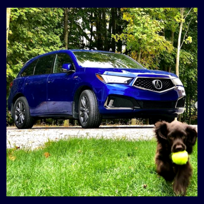 Playing fetch by Acura SUV