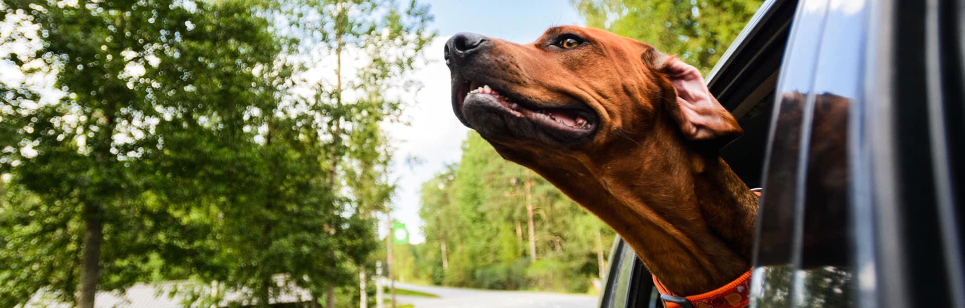 Summer Driving Tips: How to Prep Your Car for the Coming Heat Wave