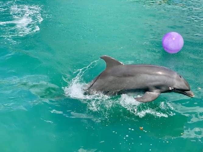 Miami Seaquarium Park Dolphin