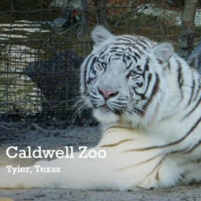 Caldwell-Zoo-Tyler-TX
