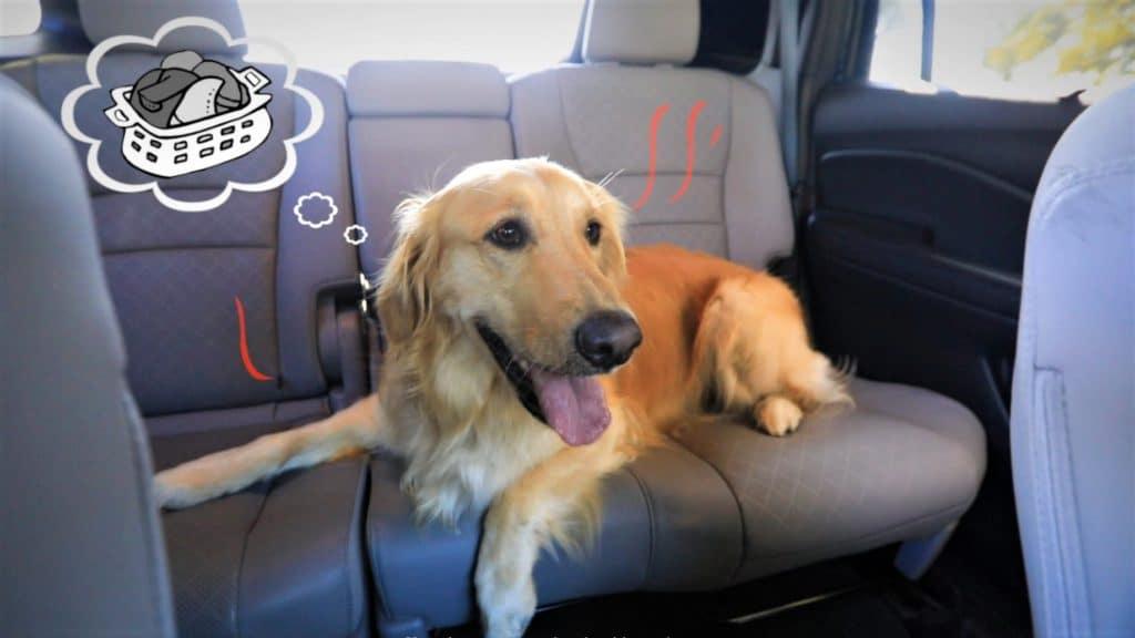 Honda Dog Friendly SUVs