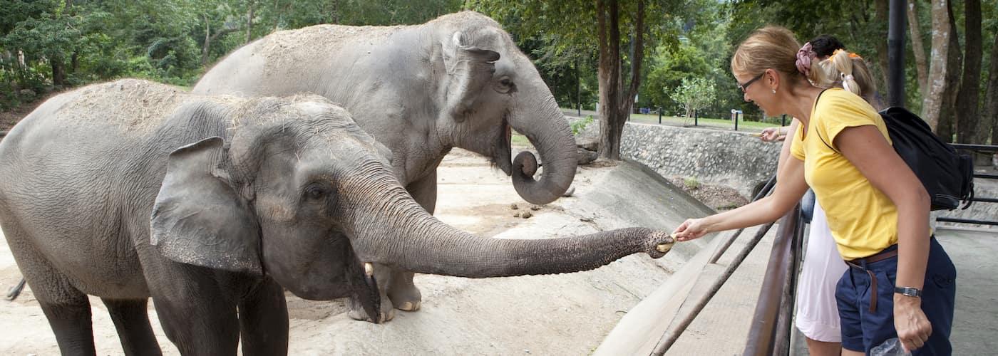 Zoo Patrons with Elephants