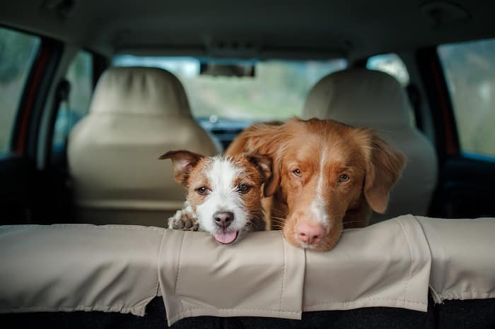 Toyota of N. Charlotte's tips on traveling with pets