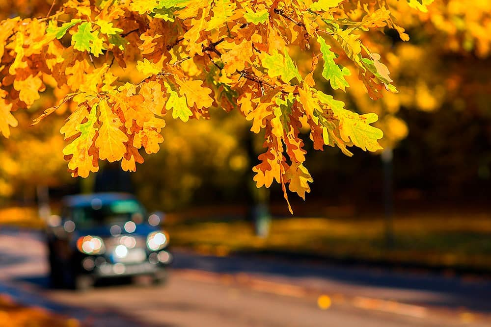 Fall car care tips from Toyota of North Charlotte