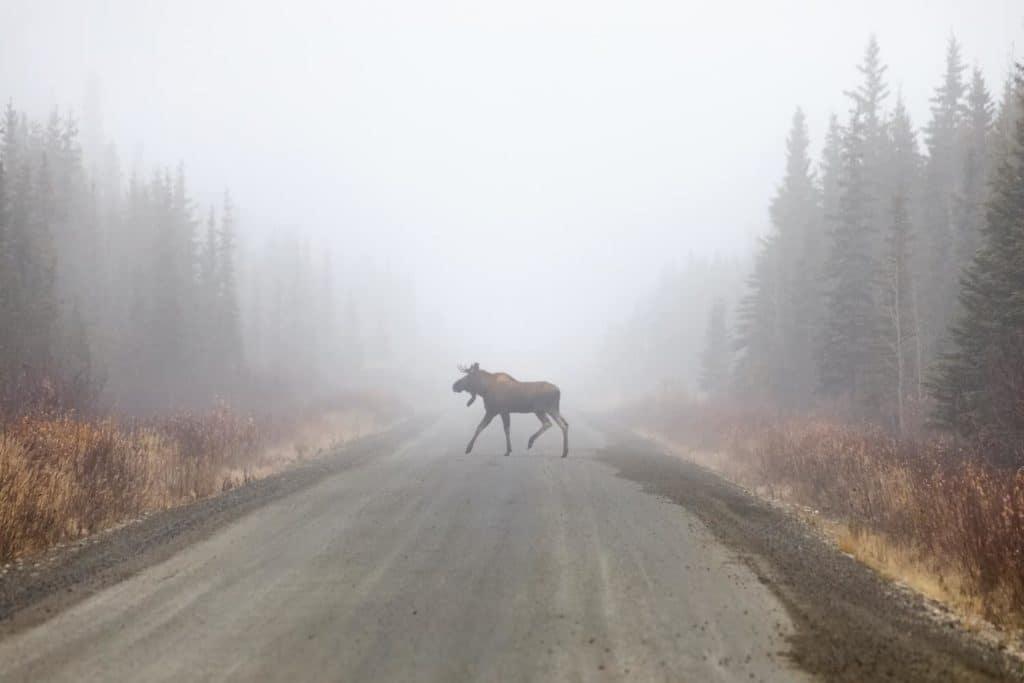 Charlotte moose road test