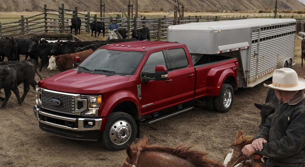 A red 2020 Ford Super Duty dually is towing a horse trailer on a farm near Carbondale, IL.